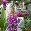 Gartentag in historischer Kulisse