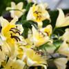 Botanischer Garten- und Blumentag