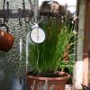 Tegernseer Garten-und Blumentage
