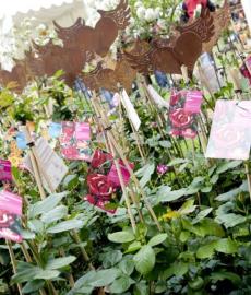 Fuldataler Seerosen- und Gartenfestival
