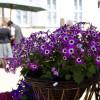 Kraichgauer Gartenbörse