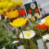Frühjahrsmesse Garten & Ambiente Bodensee IBO