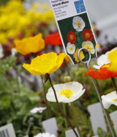 Kunst & Garten on Tour: Böblingen