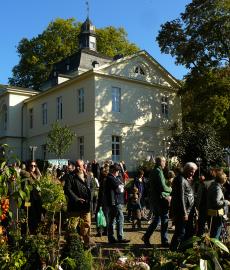 Düsseldorfer Herbstfestival