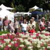 Sommer Blüten Träume Gartenmarkt