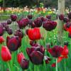 Garten- und Pflanzenmarkt Frühlingserwachen