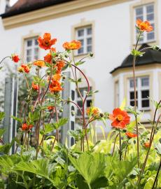 Freisinger Gartentage