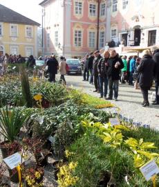 Frühlingserwachen auf Schloss Assumstadt