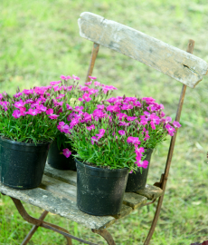 13. Blumen- und Pflanzenbörse