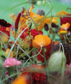 Lütetsburger Herbst