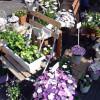 Neuwieder Gartenmarkt