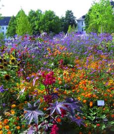 Abgesagt - Garten & Ambiente LebensArt Landgestüt Warendorf