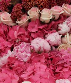 Nördlinger Rosenmarkt
