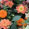 8. Gartenlust und Kunstgenuss Frohnau