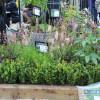 Gartenzauber im Park