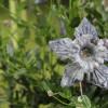 Blühende Träume – Tiroler Gartentage