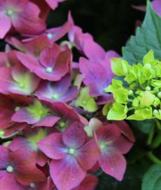 Flora 2016 Rendsburg