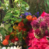 Botanischer Frühlings-Pflanzenmarkt im Rhododendron-Park