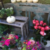 Lengericher Gartenmesse & Tag der offenen Gärten