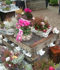 Pflanzenmarkt im Herbst - Hessenpark