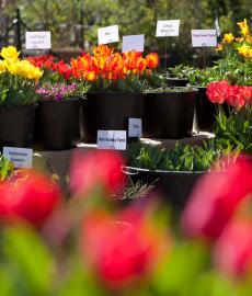 Gartenmarkt Späth'er Frühling