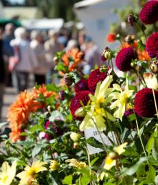 Traditionsfest mit grünem Markt 2017