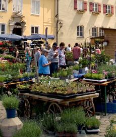 Fuchsien und Kräutermarkt Wemding