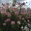 Haus- & Gartenträume SeeHotel Großräschen