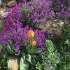 Walldorfer Gartenlust
