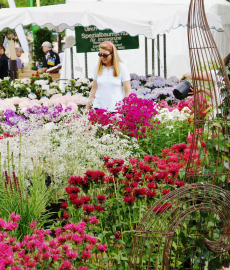 GartenRomantik Wertheim