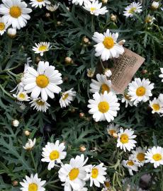 Veranstaltung: Verschoben auf 2021 – Grevenbroicher Gartentage