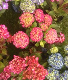 Gartenmarkt Blumenlust und Frühlingsduft Hamm