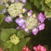 Gartenträume auf dem Landgut Krumme