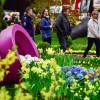 Veranstaltung: Chemnitzer Frühling
