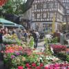 Veranstaltung: Blumenmarkt Mosbach