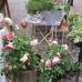 Blumenmarkt Mosbach 6