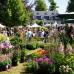 Abgesagt - GartenRomantik Wertheim 7