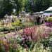 Abgesagt - GartenRomantik Wertheim 5