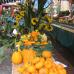 Kürbismarkt Mosbach 6