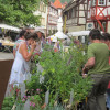 Kräutermarkt Mosbach 5