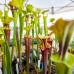 Gartenmesse, Keramika & Bauernmarkt in Nagold 3
