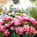 Frühjahrsmesse Garten & Ambiente Bodensee im Rahmen der IBO 2