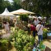 Frühlingserwachen - Stadtgarten Gelnhausen 5