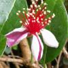 20. Tölzer Rosen- und Gartentage 4