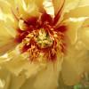 20. Tölzer Rosen- und Gartentage 2