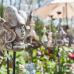Verschoben, neuer Termin wird noch bekannt gegeben - Frühlingserwachen - Stadtgarten Gelnhausen 4