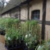 Pflanzenmarkt am Kiekeberg 8