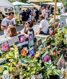 """Veranstaltung: Verschoben auf 14./15.8.21 – Gartenmarkt """"Sommer-Blüten-Träume"""""""