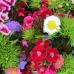 Verschoben, neuer Termin wird noch bekannt gegeben - Du und dein Garten 8