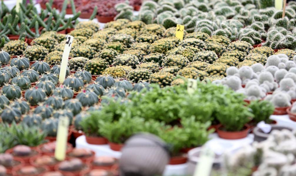 Spezialmarkt Du Und Dein Garten